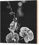 Exotic Orchid Bw Wood Print