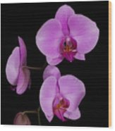 Exotic Orchids Wood Print
