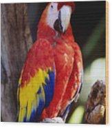 Exotic Parrot Wood Print