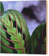 Exotic Plant Wood Print