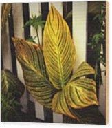 Exotica Nova Angliae Wood Print