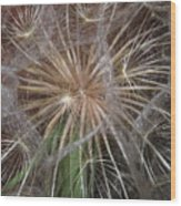 Experience The Dandelion Wood Print