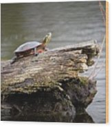 Exploring Turtle Wood Print