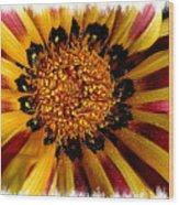 Explosion Of Color - Framed Wood Print