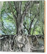 Exposed - Oak Roots Wood Print