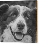 Expression Of A Border Collie Wood Print