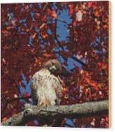Expressive Hawk Wood Print