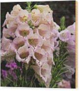 Exquisite Elegant English Foxgloves Wood Print