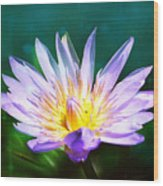 Exquisite Waterlily Wood Print