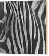 Extreme Close Up Of A Zebra Wood Print