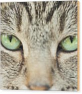Extreme Close Up Tabby Cat Wood Print