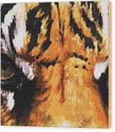 Sumatran Tiger Glare Wood Print