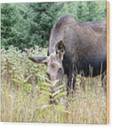 Eye-contact With The Moose Wood Print