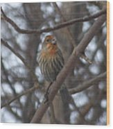 Eye-contact With The Rare - Orange Phase - House Finch Wood Print
