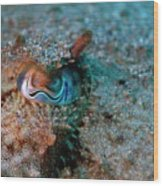 Eye Of A Common Cuttlefish Wood Print by Sami Sarkis