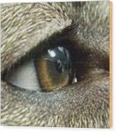 Eye Of The Canine Wood Print