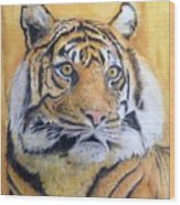 Eye Of The Tiger Wood Print