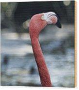 Eye Of The Flamingo Wood Print