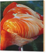 Eye Of The Flamingos Wood Print