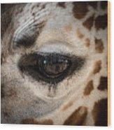 Eye Of The Giraffe Wood Print