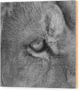 Eye Of The Lion #2  Black And White  Wood Print