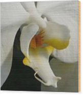 Eye Of The Orchid Wood Print