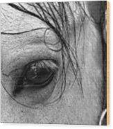 Eye Of  The Stallion Wood Print