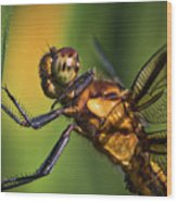 Eye To Eye Dragonfly Wood Print