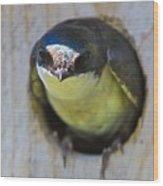 Eye To Eye Wood Print