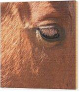 Eyelashes - Horse Close Up Wood Print