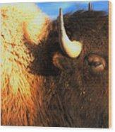 Eyes Of The Bison Spring 2018 Wood Print