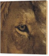 Eyes Of The Lion Color Wood Print
