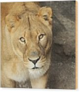 Eyes Of The Lioness Wood Print