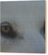 Eyes Of The Wolf - In Her Eyes Wood Print