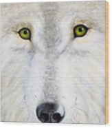 Eyes Of The Wolf Wood Print
