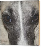 Eyes Whippet Wood Print