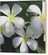 F1 Plumeria Frangipani Flowers Hawaii Wood Print