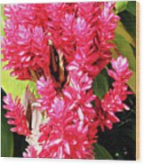 F10 Red Ginger Wood Print