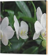 F11 Orchid Flowers Wood Print