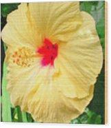 F12 Yellow Hibiscus Wood Print