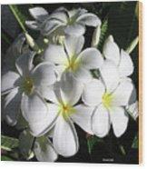 F13-plumeria Flowers Wood Print