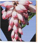 F16 Shell Ginger Flowers Wood Print