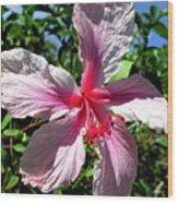F17 Pink Hibiscus Wood Print