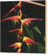 F19 Heliconia Flowers Hawaii Wood Print