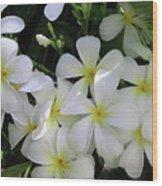 F2 Plumeria Frangipani Flowers Hawaii Wood Print