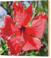 F20 Red Hibiscus Wood Print