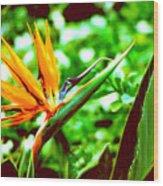 F21 Bird Of Paradise Flower Wood Print