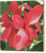 F22 Cannas Flower Wood Print