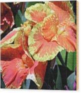 F24 Cannas Flower Wood Print