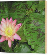 F6 Water Lily Wood Print